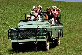 Safari Land Rover-South Africa